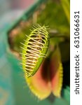 Small photo of Venus fly trap