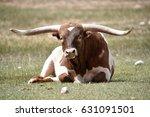 Texas Long Horn Bull Bull In...