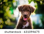 Stock photo brown cute labrador retriever puppy dog looking withabstract bokeh foliage color background 631094675