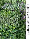Many Herbs in a garden herb bed with Lavendula, Sage and other aromatic spice and tea plants.