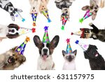 multiple pet animals isolated... | Shutterstock . vector #631157975
