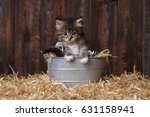 Adorable Kittens In A Barn...