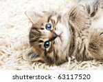 Stock photo funny kitten in carpet 63117520