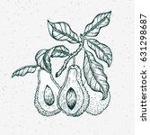 vector hand drawn avocado and... | Shutterstock .eps vector #631298687
