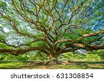 big tree | Shutterstock . vector #631308854