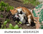 two cats staged a fight in the... | Shutterstock . vector #631414124