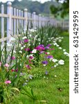 Small photo of Garden Garden flowers