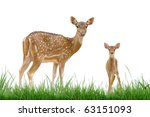 axis deer isolated with grass | Shutterstock . vector #63151093