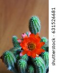 cactus chamaecereus with red... | Shutterstock . vector #631526681