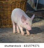 beautiful pig | Shutterstock . vector #631579271