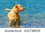 dog playing in water | Shutterstock . vector #631738529