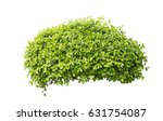 Bush Isolated On White...