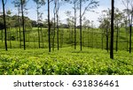 the loolecondera estate was the ... | Shutterstock . vector #631836461