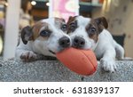 Stock photo dogs are playing a ball 631839137