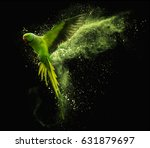 Flying green parrot alexandrine ...
