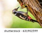 Cute Woodpecker On Tree. Green...