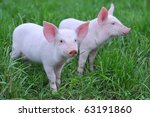 small pigs on a grass - stock photo