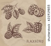 set of drawing blackberry.... | Shutterstock . vector #631919855