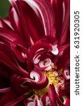 red dahlia flower macro.... | Shutterstock . vector #631920305