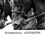 Horses In Carriage Close Up In...