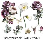 set elements of rose and... | Shutterstock . vector #631979321