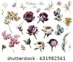 set elements of rose  hydrangea.... | Shutterstock . vector #631982561