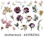 set elements of rose  hydrangea.... | Shutterstock . vector #631982561