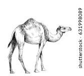 camel in full growth goes ... | Shutterstock .eps vector #631998089