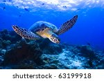 Sea Turtle Swimming Over The...
