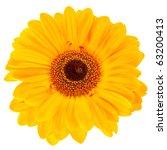 Close Up Yellow Daisy Flower...