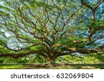big tree | Shutterstock . vector #632069804