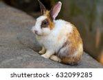the rabbits in  the farm. | Shutterstock . vector #632099285