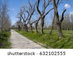 tree lined street | Shutterstock . vector #632102555