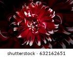 red dahlia flower. beautiful... | Shutterstock . vector #632162651