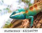 Blue Crested Lizard Climbing...