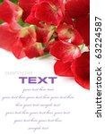 close up of beautiful hydrangea ... | Shutterstock . vector #63224587