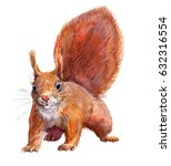 watercolor single squirrel... | Shutterstock . vector #632316554