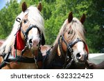 Cold Blooded Horses In Front O...