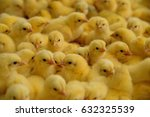 Lot Of Little Chickens In A Farm