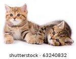 Stock photo british kittens on white backgrounds 63240832