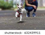 Stock photo dog running with girl in the background 632439911