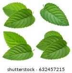 fresh mint collection isolated... | Shutterstock . vector #632457215