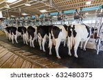 cow milking facility  milking... | Shutterstock . vector #632480375