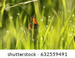 A Butterfly In The Field Sits...
