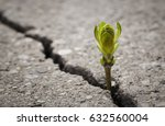 close up of plant growing up... | Shutterstock . vector #632560004