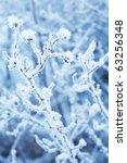 frozen winter plant | Shutterstock . vector #63256348