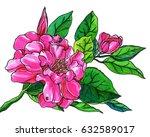 pink camellia flower blossom.... | Shutterstock . vector #632589017