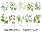 hand drawn watercolor set green ... | Shutterstock . vector #632597969