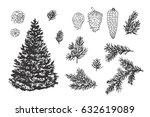 hand drawn doodle fir tree... | Shutterstock .eps vector #632619089