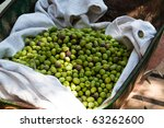 Harvesting of green olives using a wheelbarrow in Fethiye, Turkey - stock photo